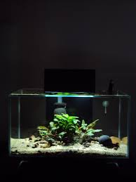 Fluval Edge Aquascape Fluval Edge