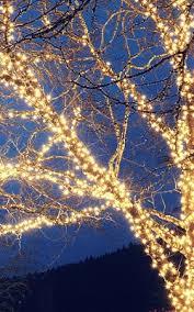 christmas lights tree wrap wrapping trees with christmas lights infographics