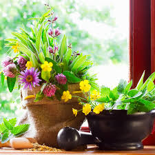 indoor gardening tips femside com