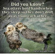 Sea Otter Meme - did you know sea otters hold hands when they sleep so they don t
