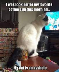 Asshole Meme - i was looking for my favorite coffee cup this morning my cat is