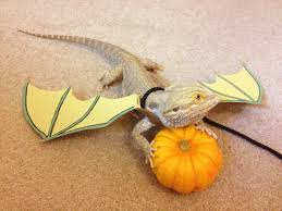 All Dressed Up For Halloween Halloween Bearded Dragon Dragon