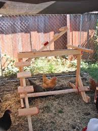 Backyard Chickens Forum by Chickens Enjoying Playing With Footballs Which Form Part Of The