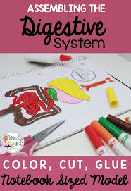 students can learn all about the key organs in the digestive