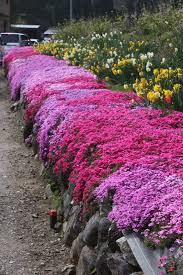 flowering ground cover plants full sun round designs