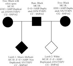 genetic characterization of coat color genes in brazilian crioula