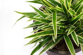 8 toxin filtering houseplants s farm country kitchen