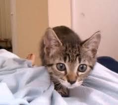 Kitten Bed Kitten Trending Gifs Page 12