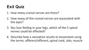 Cranial Nerves Worksheet Science Starter List The 5 Senses Ppt Video Online Download