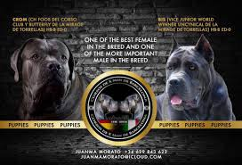 622 Best One Day Images Cane Corso For Sale Buy Cane Corso Puppies Online Canecorso