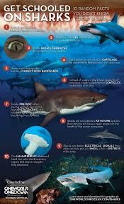 113 best tubarões images on pinterest shark week sharks and