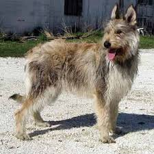 dog breed list b all dog breeds beginning with the letter b