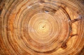 wood tree rings images Tree rings in taxodium distichum wood bald cypress 4 flickr jpg