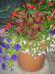 Westwood Flower Garden - 62 best flower garden images on pinterest flower gardening