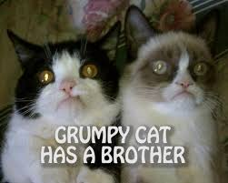 Original Grumpy Cat Meme - grumpy cat has a brother grumpy cat know your meme