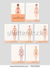 Anatomy Of Women Body Anatomy Female Vector Illustration Nerves Muscular Stock Vector