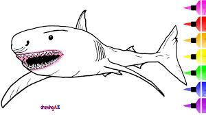 how to draw white shark u0026 shark drawing and coloring page for kids