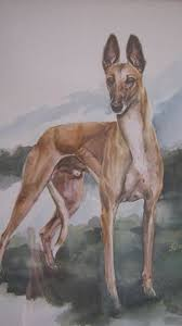 art by sarah regan snavely sighthound inspired art pinterest