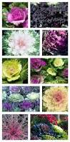 74 best color fall gardens images on pinterest plants beautiful