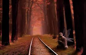 fantasy autumn wallpaper free images tree nature forest sunlight morning train track