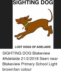 Lost Dog Meme - sighting dog lost dogs of adelaide sighting dog blakeview adelaide