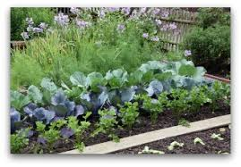 vegetable garden pictures to help plan your garden