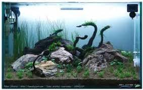 membuat aquascape bening cara membuat aquascape aquascape design jakarta