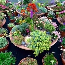 Ideas For Container Gardens - love your pots 25 inspiring u0026 practical ideas for container