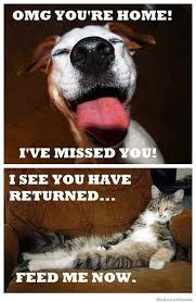 Dog Cat Meme - 25 most adorable dogs with cats memes adorable dogs memes and dog