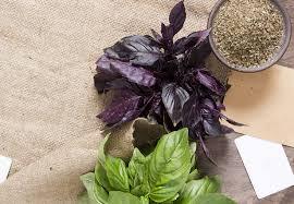basilico in vaso malattie basilico coltivazione in vaso idee green