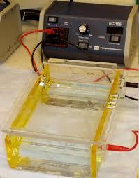 gel electrophoresis wikipedia