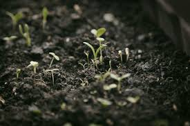 how to bring a dead plant back to life can a brown lawn be saved u2013 how to revive a dead lawn