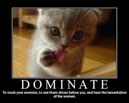 Cute Kittens Meme - collection of top 30 most funny kittens of all time just laughs