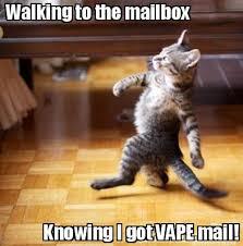 Cat Meme Maker - meme maker walking to the mailbox knowing i got vape mail