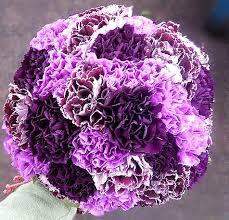 Purple Carnations Purple Carnation Wedding Bouquets Google Search Someday