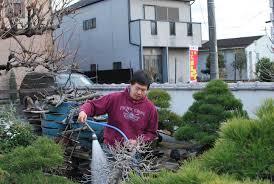 repotting a beast peter tea bonsai