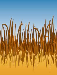 vegetaion images Jungle grass vector illustration stock vector illustration of jpg