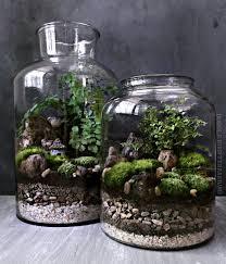 terrarium design easiest terrarium plants 2017 ideas terrariums