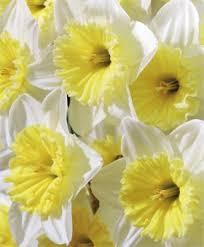 flower bulb index