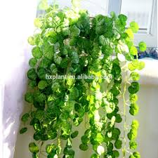 wall hanging planters articles with indoor hanging planters diy tag indoor hanging