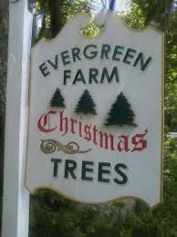 pick your own christmas trees in worcester county local food