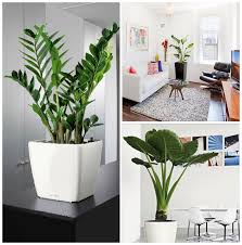 Awesome Indoor Decorative Plants Photos Interior Design Ideas - Home decoration plants