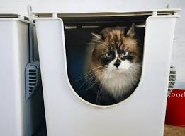 9 litter box mistakes you may be making iheartcats com
