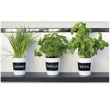 les herbes aromatiques en cuisine cuisine plante aromatique dans la cuisine plante aromatique dans