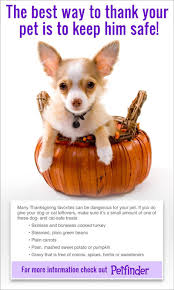 thanksgiving dinner is not for pets petfinder