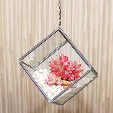 succulent kits mini geometric glass cube succulent terrarium kit by dingading