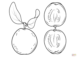 guava and its cross section coloring page free printable
