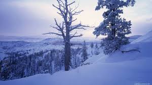 winter winter beautiful snow white dead tree awesome trees nature
