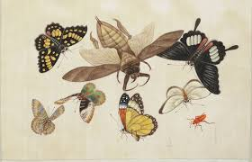 butterfly photo album bibliodyssey the butterfly album
