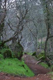 spirit halloween auburn ca on the trail to hidden falls auburn california treescansayitall
